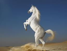 İnsanın Vazgeçilmezi Atlar