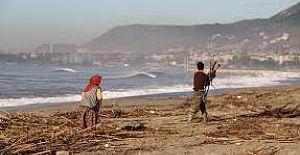 Kışlık yakacaklarını sahil kenarından topladılar