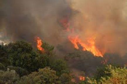 Türkler'de Orman Yangını
