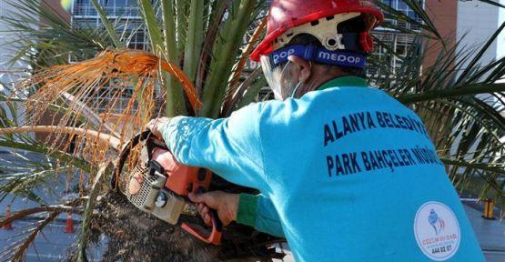 Alanya Belediyesi Sokağa Çıkma Yasağını Fırsata Çevirdi
