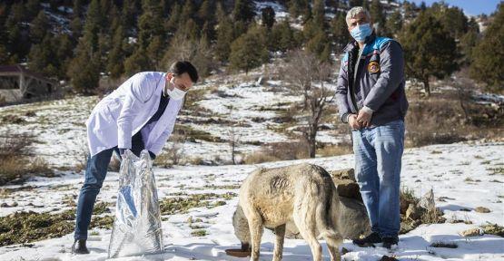 Alanya Belediyesi Zorlu Doğa Koşullarında da Sokak Hayvanlarının Her Zaman Yanında