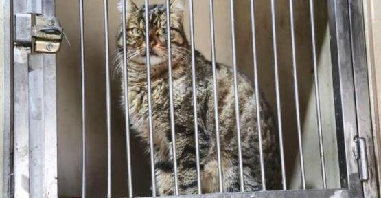 Sokak kedilerinde ölümcül ve bulaşıcı salgın tehlikesi