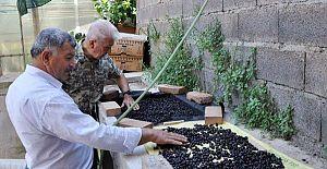 Antalya'da kahve üretimine geçiliyor