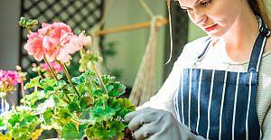 Evde kendi olanaklarıyla bitki yetiştirmek isteyenlere 5 öneri