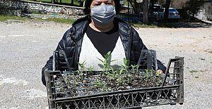 İbradı tıbbi aromatik bitkilerin merkezi olacak