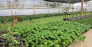 Büyükşehir, çiftçiye destek için tıbbi ve aromatik bitki üretiyor