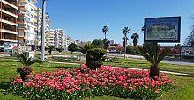 Baharın müjdecisi laleler Antalya yı süslüyor
