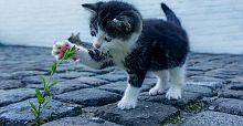 Sağlığınız için kedi sevin