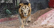 Hindistan'da Covid hayvanlara sıçradı